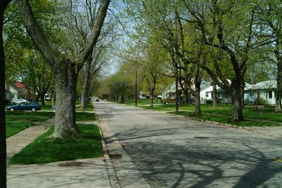 Street With Trees on the Sides